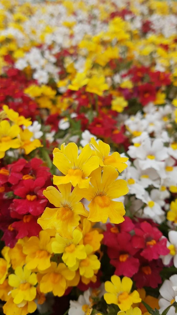 Aurelia-l-arte-dei-fiori